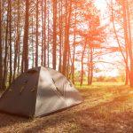 teltis internetā